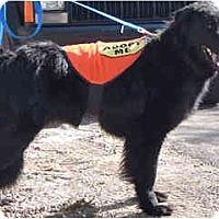 Adopt A Pet :: Walter - Scottsdale, AZ