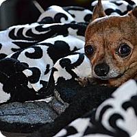 Adopt A Pet :: Paco - Dayton, OH
