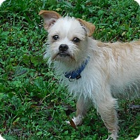 Adopt A Pet :: Smokey - Ormond Beach, FL