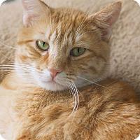 Adopt A Pet :: Sebastian - St Louis, MO
