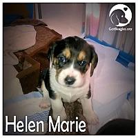 Adopt A Pet :: Helen Marie - Novi, MI