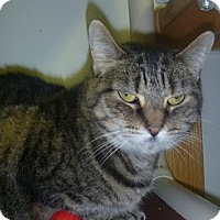 Adopt A Pet :: Miss Kitty - Hamburg, NY