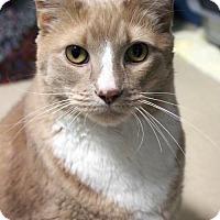 Adopt A Pet :: Boy - Paris, ME