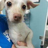 Adopt A Pet :: Amy Sedaris - Jersey City, NJ