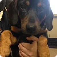 Adopt A Pet :: Rusty - Gainesville, FL