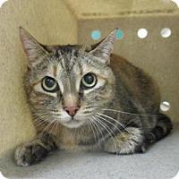 Adopt A Pet :: MUFFY - Reno, NV