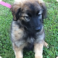 Adopt A Pet :: Jazzy - New Oxford, PA