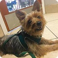 Adopt A Pet :: PHILLIP PHILLIPS - Boca Raton, FL