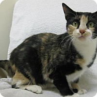 Adopt A Pet :: Kit Kat - Gary, IN