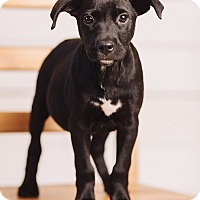 Adopt A Pet :: Andy - Portland, OR