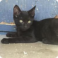 Adopt A Pet :: Leo - Yucaipa, CA