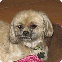 Adopt A Pet :: Picachu - San Antonio, TX