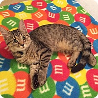 Adopt A Pet :: Biscuit - Xenia, OH