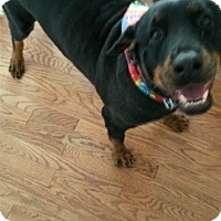 Adopt A Pet :: Delilah- Courtesy Post - Rexford, NY