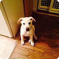 Adopt A Pet :: Si - PENDING - Grafton, WI