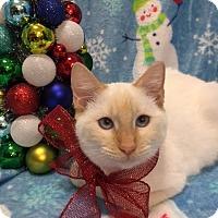 Adopt A Pet :: Suki - Pasadena, TX