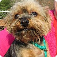 Adopt A Pet :: Wrigley - Reeds Spring, MO