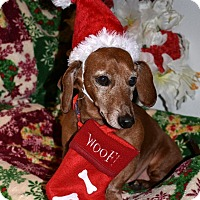 Adopt A Pet :: Wally-sweet,6-8 yrs, $250 fee - Spokane, WA