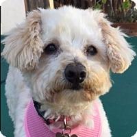 Adopt A Pet :: Tippi - La Costa, CA