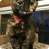 Adopt A Pet :: Lilly-adoption pending - Hanna City, IL