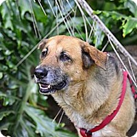 Adopt A Pet :: princess nina - hollywood, FL