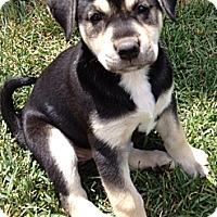 Adopt A Pet :: DUCHESS - Torrance, CA