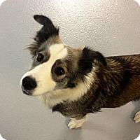 Adopt A Pet :: Jade - Muskegon, MI