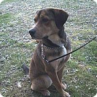 Adopt A Pet :: Dixon - Lancaster, VA