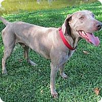 Adopt A Pet :: Jake - Sarasota, FL