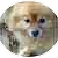 Adopt A Pet :: Mikey - Chesapeake, VA
