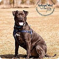 Adopt A Pet :: Jett - Medina, OH
