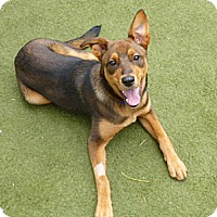 Adopt A Pet :: Dolores - FOSTER or ADOPT! - San Francisco, CA
