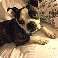 Adopt A Pet :: Bonnie - Greensboro, NC