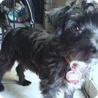 Adopt A Pet :: Jack - San Dimas, CA