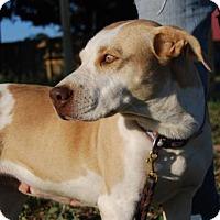 Adopt A Pet :: Janie - Georgetow, TX