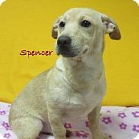 Adopt A Pet :: Spencer - Bartonsville, PA