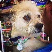 Adopt A Pet :: Loofah - Memphis, TN