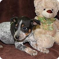 Adopt A Pet :: Cherry - Salem, NH