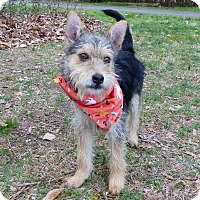 Adopt A Pet :: Banjo - Mocksville, NC