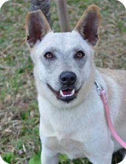 Terrier (Unknown Type, Medium)/Shepherd (Unknown Type) Mix Dog for adoption in San Ramon, California - Jenny