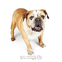Adopt A Pet :: Helena - Tempe, AZ
