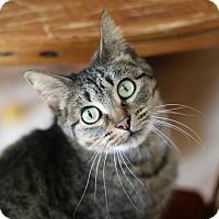 Adopt A Pet :: Jersey - New Prague, MN