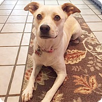 Adopt A Pet :: Kate - San Antonio, TX