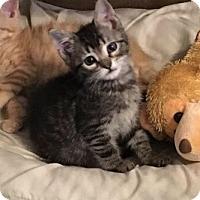 Adopt A Pet :: LulaBell - Phillipsburg, NJ