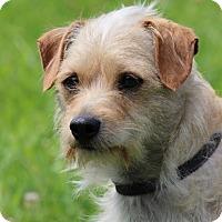 Adopt A Pet :: Poochie (Has application) - Washington, DC