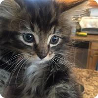 Adopt A Pet :: *TEDDY - Sacramento, CA