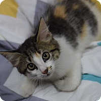 Adopt A Pet :: Twinkle - Manhattan, NY