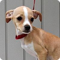 Adopt A Pet :: Eleanor - Yardley, PA