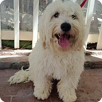 Adopt A Pet :: Sebastian (BH) - Santa Ana, CA