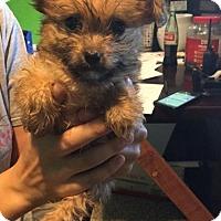 Adopt A Pet :: Reagen - Phoenix, AZ